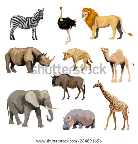 wild african animals set with