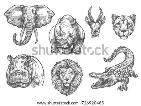 wild african animals sketch