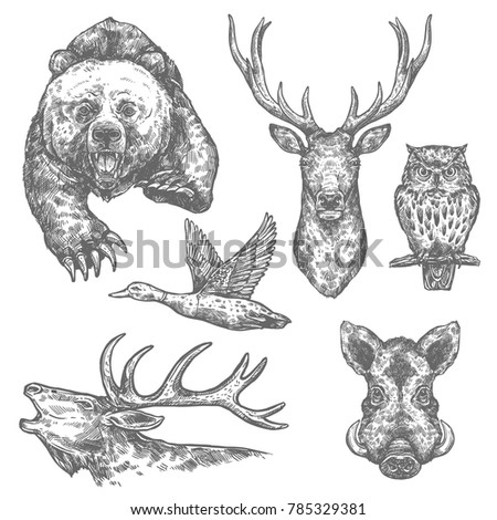 Wild animal and bird isolated sketch with bear and deer, moose and owl, boar, elk and duck. Carnivore and herbivore animal for hunting sport, zoo and woodland wildlife themes design