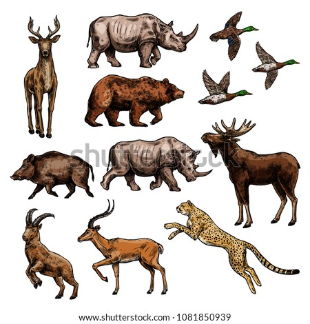 Wild animal and bird sketch set. African safari jaguar or leopard, rhino and antelope, duck, forest deer, bear and elk, reindeer, boar and goat icon for hunting sport and wildlife themes design