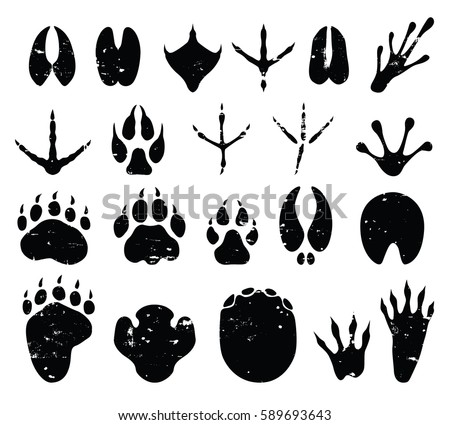 Wild Animal Foot Prints