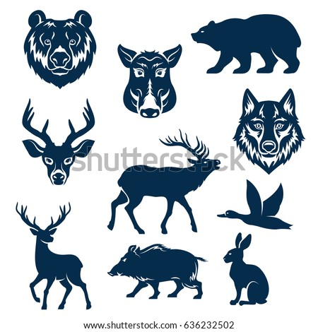wild animals and birds for