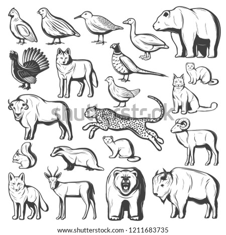 Wild animals and birds, hunting sport. Vector monochrome bear, wolf and cheetah, buffalo, lynx and bison, pheasant, quail and goose, gazelle, grizzly and fox, squirrel, mink and sable