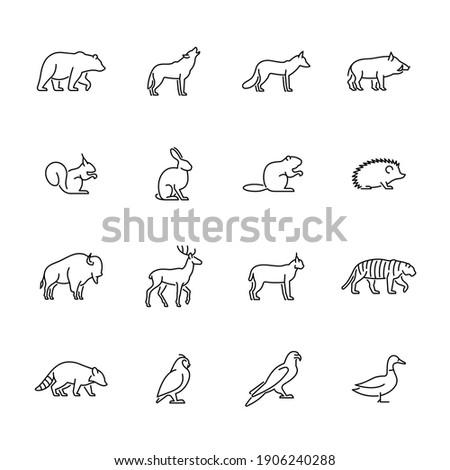 wild animals and birds vector