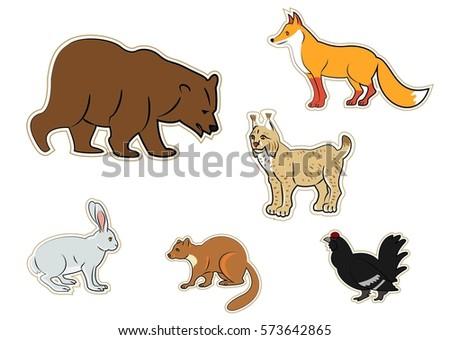 wild animals  animals  forest
