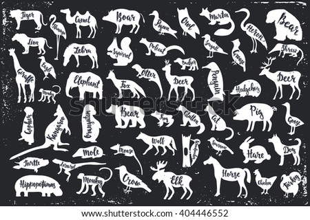 wild animals isolated