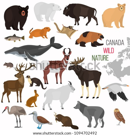 wild animals of canada color