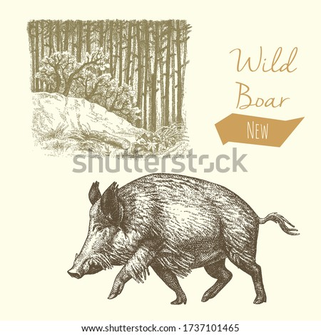 Wild boar and forest, vintage engraved illustration Photo stock ©