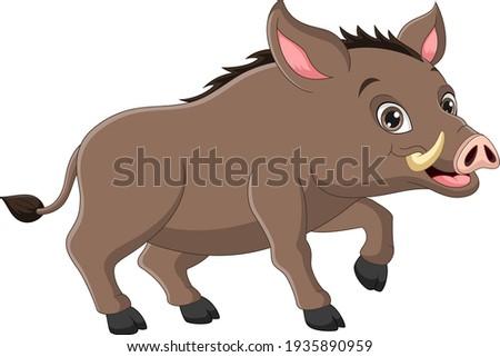 Wild boar cartoon on white background Photo stock ©