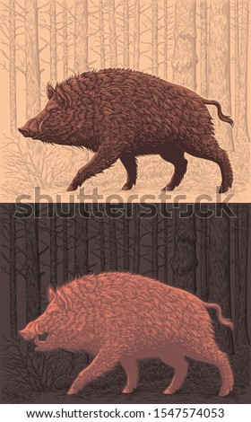 wild boar is walking in the