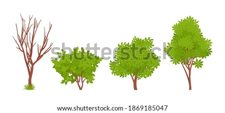 Wild bush greenery plant, summer and autumn shrub stem set. Dry tree brown branches, lush foliage, fresh leaves for forest, garden, park, city street decoration. Vector flat style cartoon illustration Foto stock ©