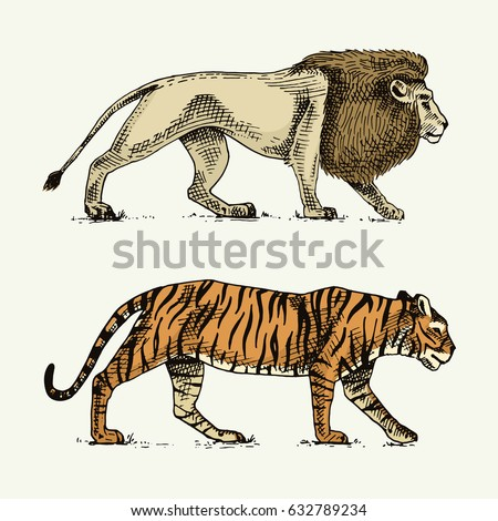 wild cats set  lion and tiger