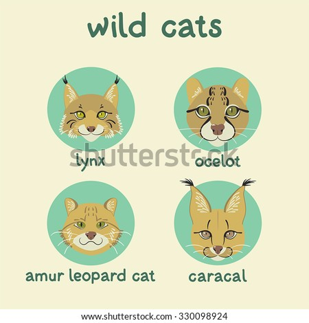 wild cats set  lynx  ocelot