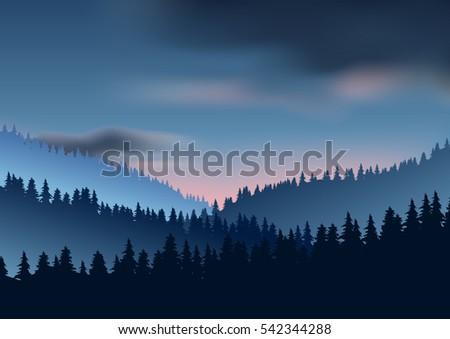 wild coniferous wood in a