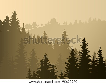 wild coniferous wood in a