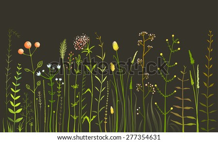 wild field flowers and grass on