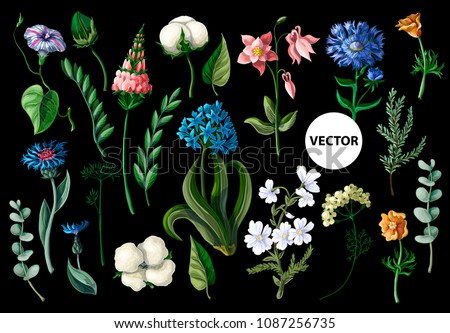 wild flowers isolated on a