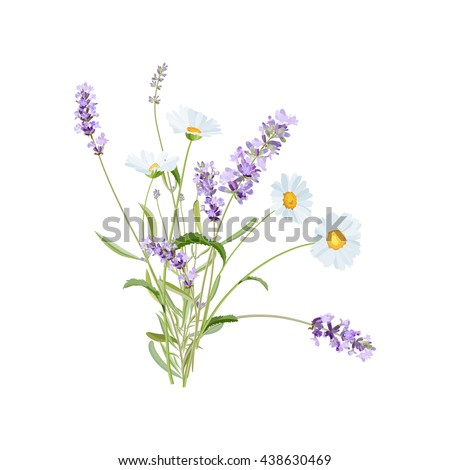 wild flowers lavender and daisy
