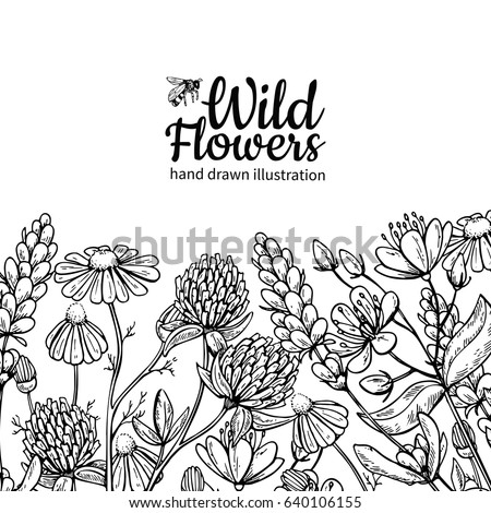 wild flowers vector drawing set