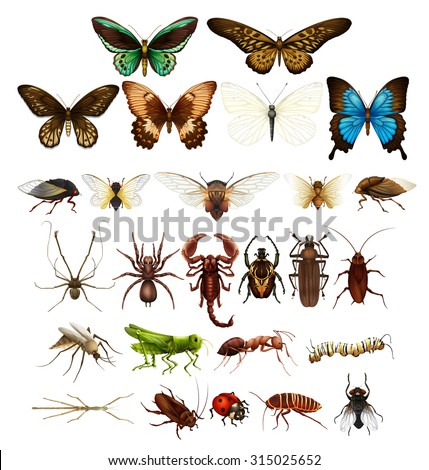 wild insects in various types