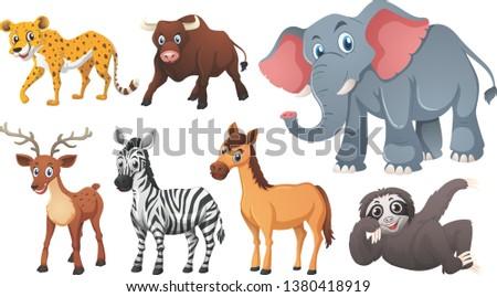 wild life animals