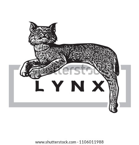 wild lynx in graphic engraving