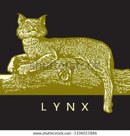 wild lynx  lynx rufus  in