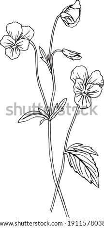 Wild pansy hand drawn illustration. Black and white vector drawing of viola tricolor. Blooming wild pansy vintage style drawing. Сток-фото ©