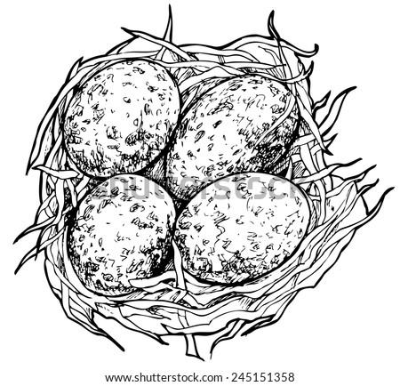 quail bird drawing illustration download free vector art stock