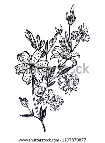 Wild sharp summer lilium flowers, field bouquet sketch in line art style. Elegant floral tiger lily blossom, romantic decoration. Botanical vector isolated illustration. #1197870877