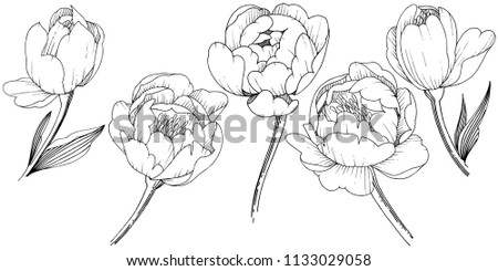 wildflower peony in a vector