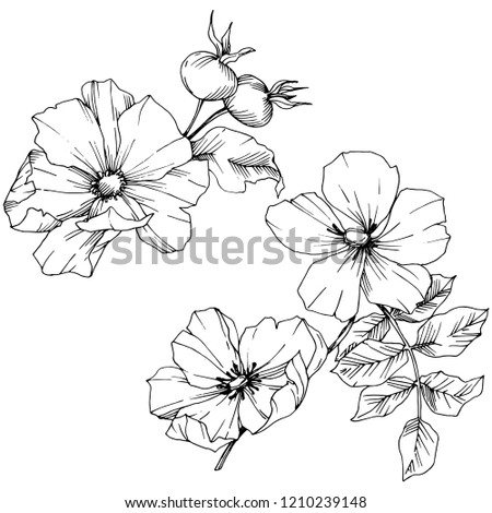 Wildflower rosa canina in a vector style isolated. Black and white engraved ink art. Vector flower for background, texture, wrapper pattern, frame or border. #1210239148