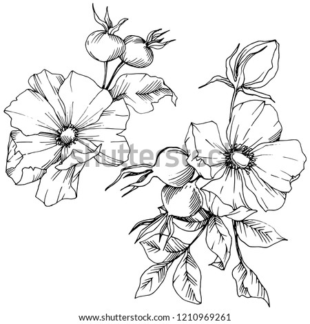 Wildflower rosa canina in a vector style isolated. Black and white engraved ink art. Vector flower for background, texture, wrapper pattern, frame or border. #1210969261