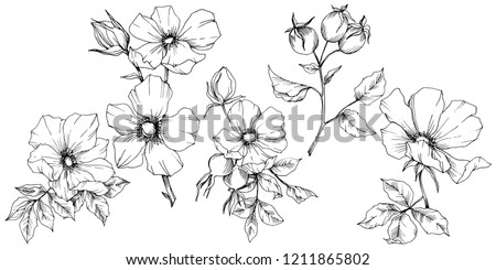 Wildflower rosa canina in a vector style isolated. Black and white engraved ink art. Vector flower for background, texture, wrapper pattern, frame or border.