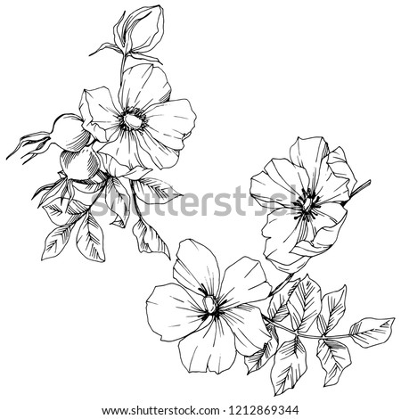 Wildflower rosa canina in a vector style isolated. Black and white engraved ink art. Vector flower for background, texture, wrapper pattern, frame or border. #1212869344