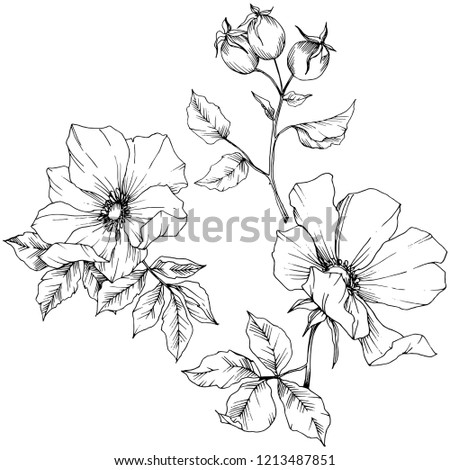 Wildflower rosa canina in a vector style isolated. Black and white engraved ink art. Vector flower for background, texture, wrapper pattern, frame or border. #1213487851