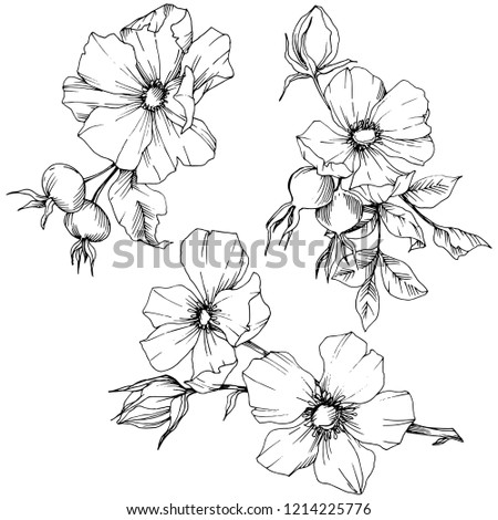 Wildflower rosa canina in a vector style isolated. Black and white engraved ink art. Vector flower for background, texture, wrapper pattern, frame or border. #1214225776