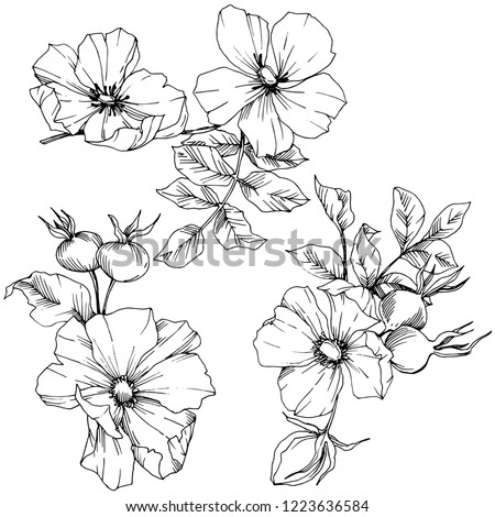 Wildflower rosa canina in a vector style isolated. Black and white engraved ink art. Vector flower for background, texture, wrapper pattern, frame or border. #1223636584