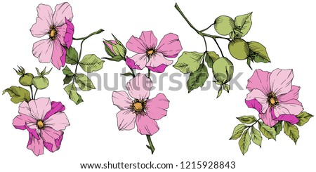 Wildflower rosa canina in a vector style isolated. Pink engraved ink art. Vector flower for background, texture, wrapper pattern, frame or border.