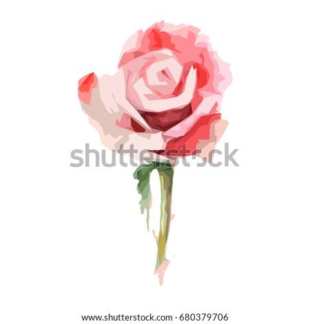 wildflower rose flower in a