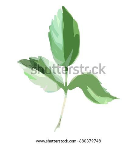 wildflower rose leaf in a