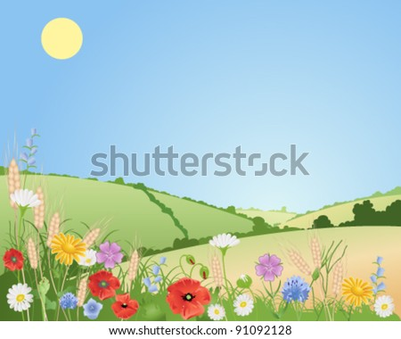 wildflowers in a beautiful summer landscape with ears of wheat poppies daisies cornflowers corncockle  harebells and corn marigolds vector illustration in eps 10 format
