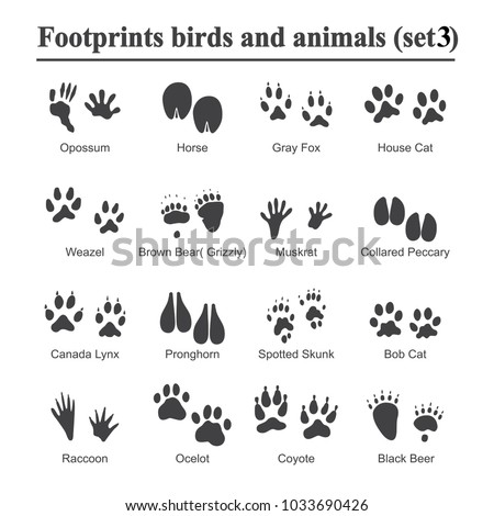wildlife animals and birds
