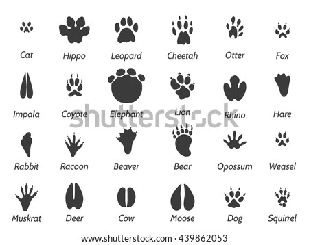wildlife animals black