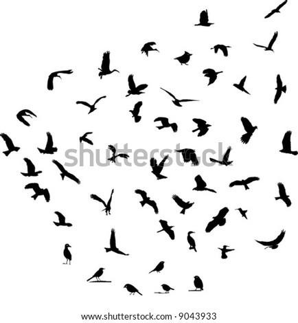 Wildlife bird silhouettes set - stock vector