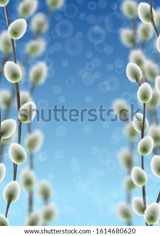 willow branches on blue sky
