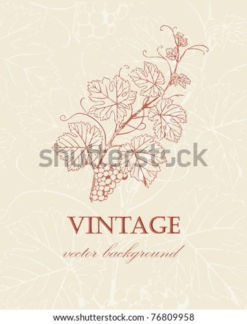 Wine label with  grape branch in retro style