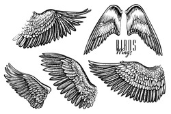 Wing of bird or angel, hand drawn vector illustrations. Black line engraved set of different wings, what are good for logo, emblem, tattoo or vintage design.