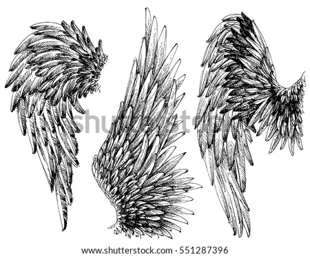Shutterstock Wings set. Hand drawn detailed wings collection
