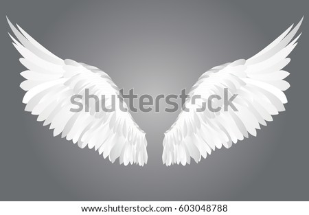 wings vector illustration on